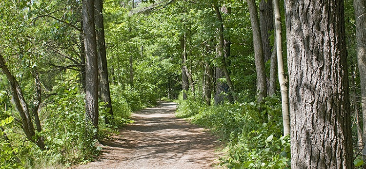 Boyd conservation area hiking trail