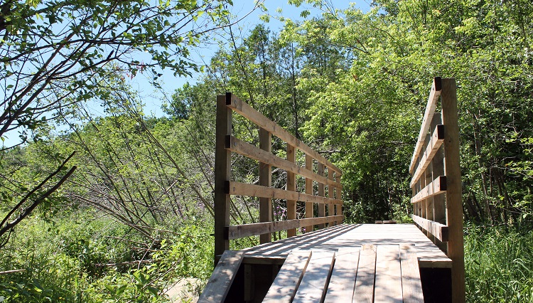hiking boardwalk at bruce's mill conservation area