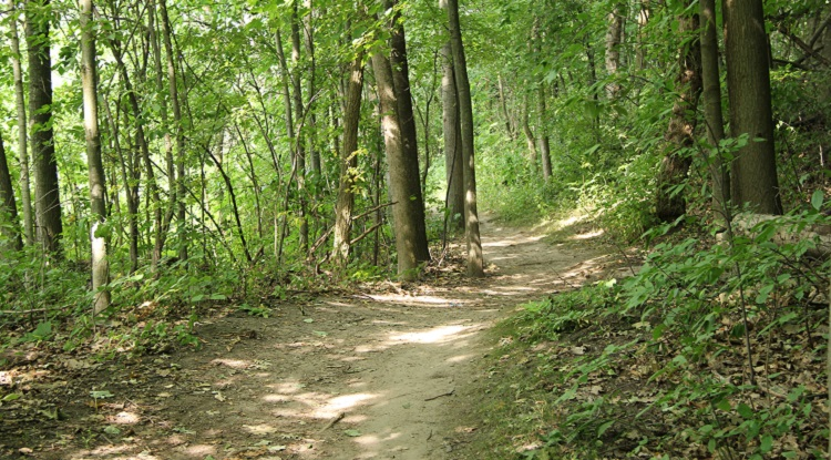 Hiking trail at heart lake conservation area