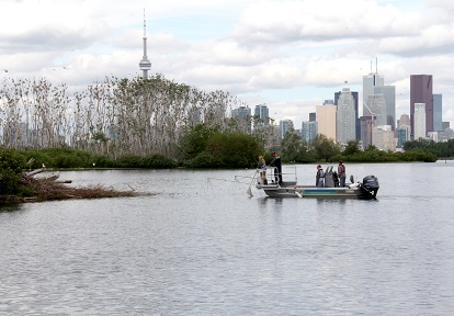 TRCA environmental monitoring staff electrofishing on Lake Ontario Waterfront
