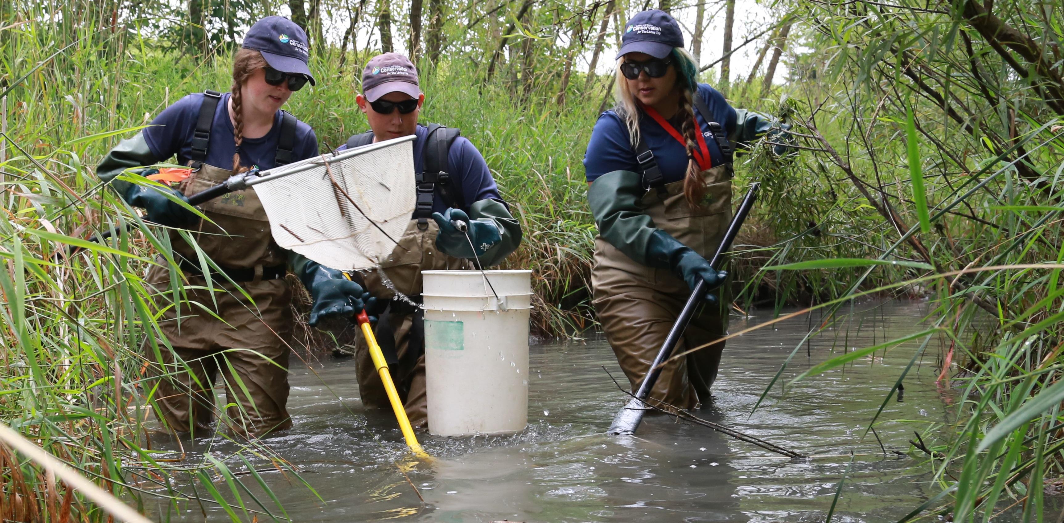 TRCA staff monitor aquatic life in a local stream