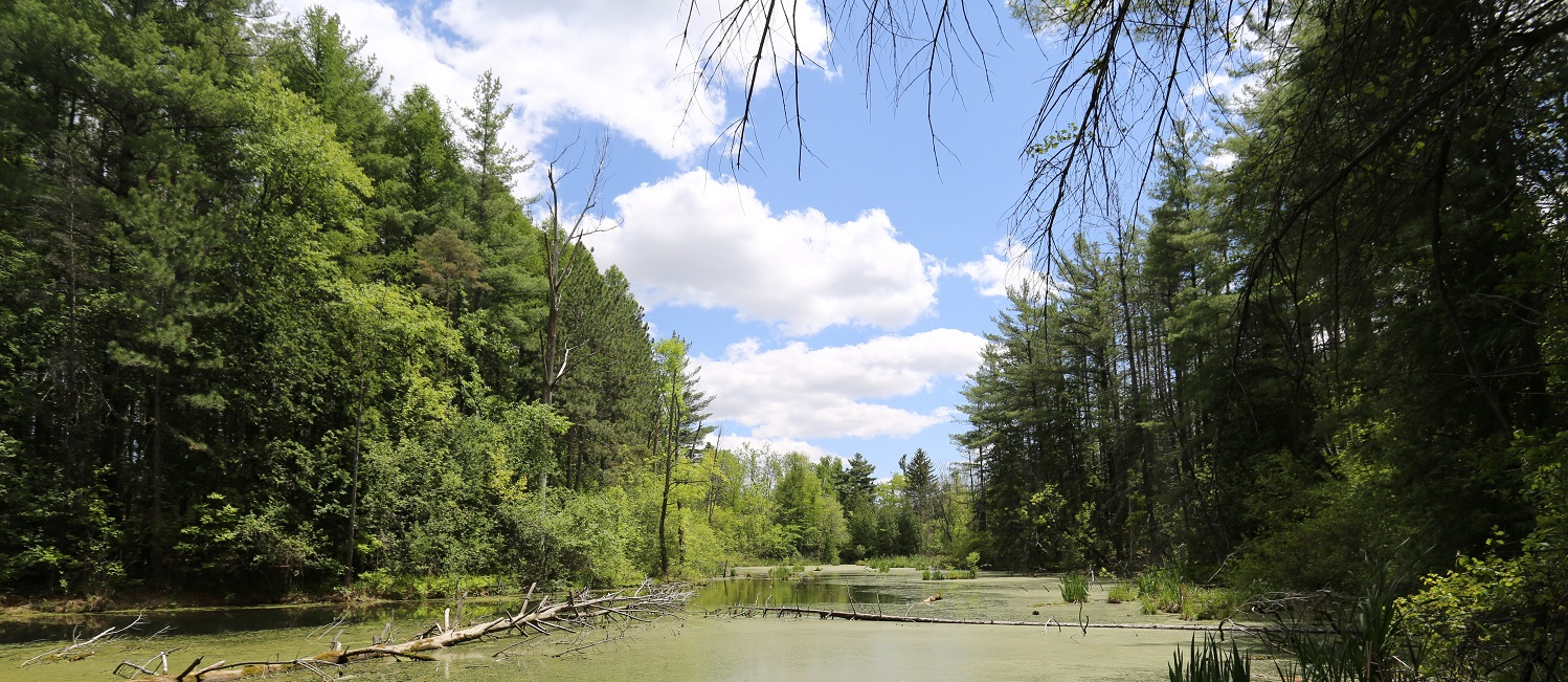 forest and wetland