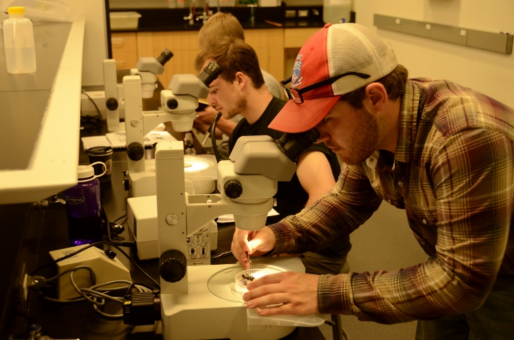 People looking through microscopes