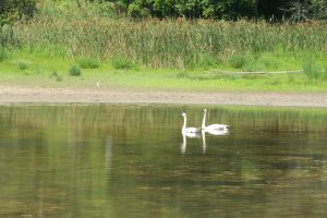 Workshop: Introduction to Nature Photography @ Kortright Centre for Conservation        