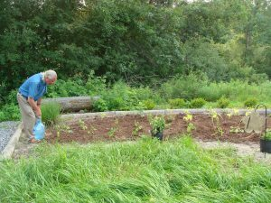 Sierra Club Brampton annual Community Pollinator Plot Maintenance and Wildflower Planting @ Heart Lake Conservation Area