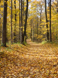 Fall Colours Walk @ Tasca Park Trails | Nobleton | Ontario | Canada