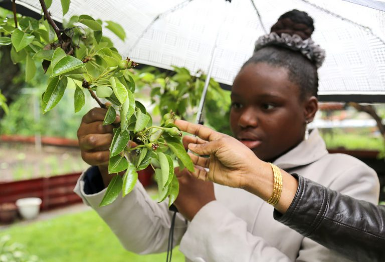 a local resident takes part in Black Creek SNAP's fruit tree care certificate program