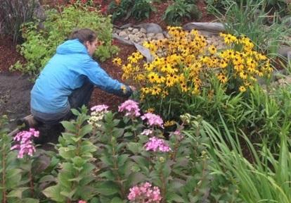 Burnhamthorpe SNAP raingarden planting project at Sheridan Nurseries
