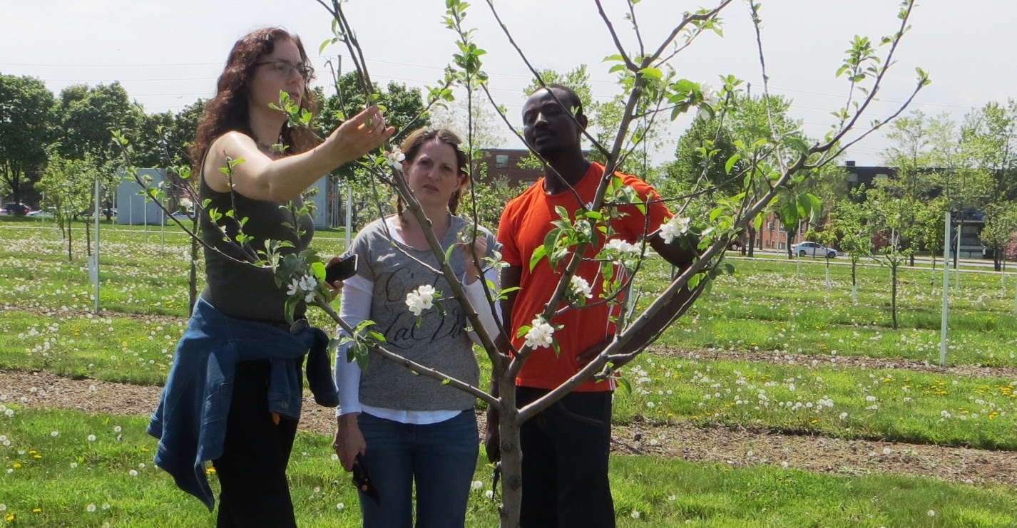 Black Creek SNAP residents receive orchard training