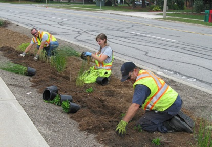 Residents work on the County Court SNAP bioswale project