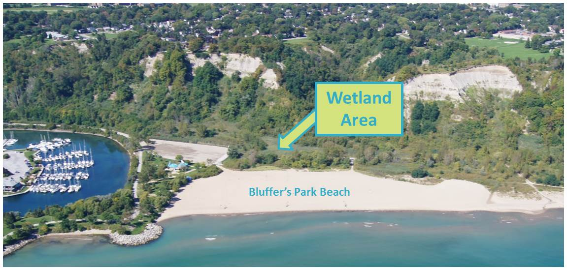 Image showcasing location of wetland which is immediately north of the Bluffer's Park beach area
