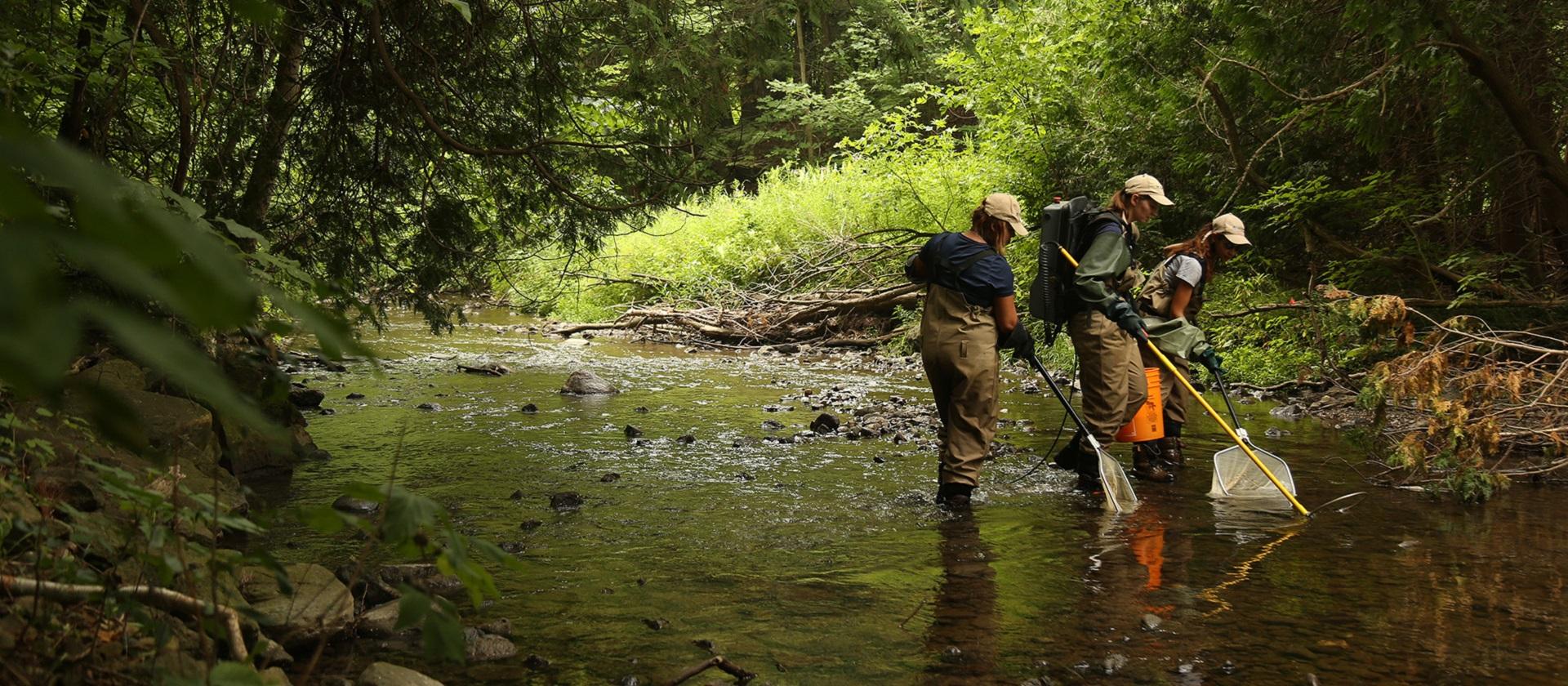 TRCA environmental monitoring staff electrofishing in a stream