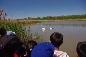 Junior Birders Camp