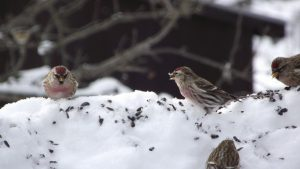 Winterize Your Nature-Friendly Garden! @ Toronto Public Library-College/Shaw Branch | Toronto | Ontario | Canada