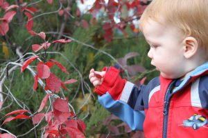 Parent and Tot Trail Walk @ Claremont Field Centre | Goodwood | Ontario | Canada