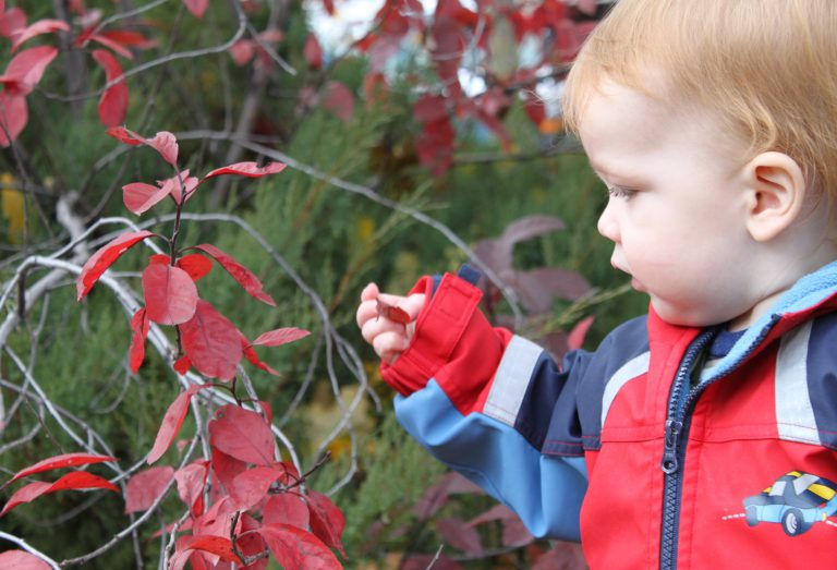 Child with autumn fall leave