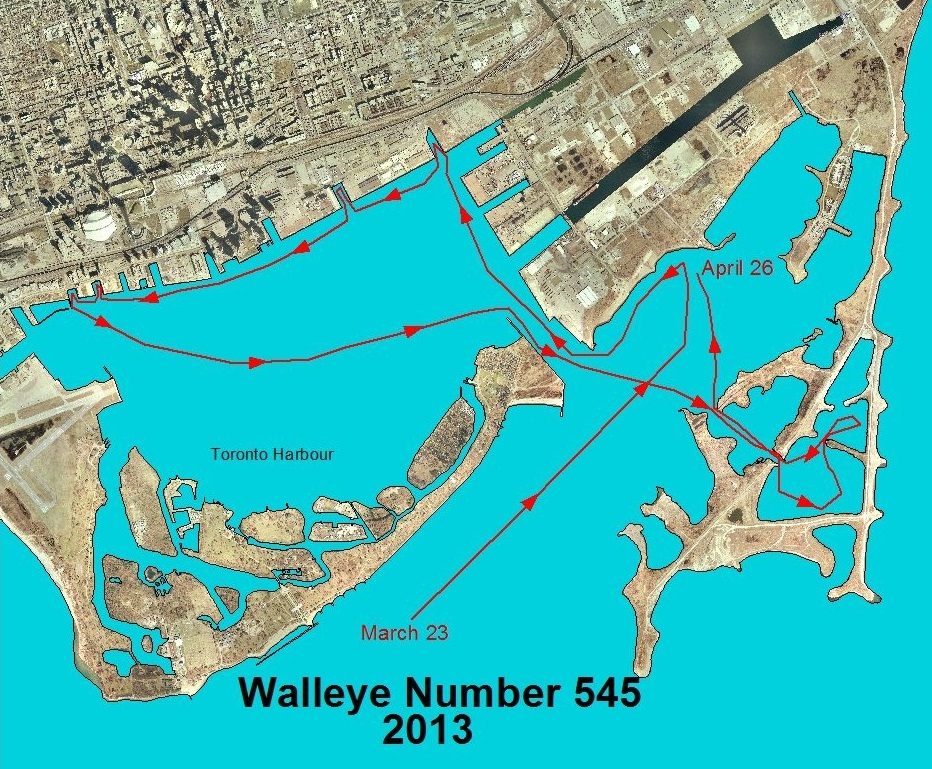 map of walleye movement in and around Toronto harbour