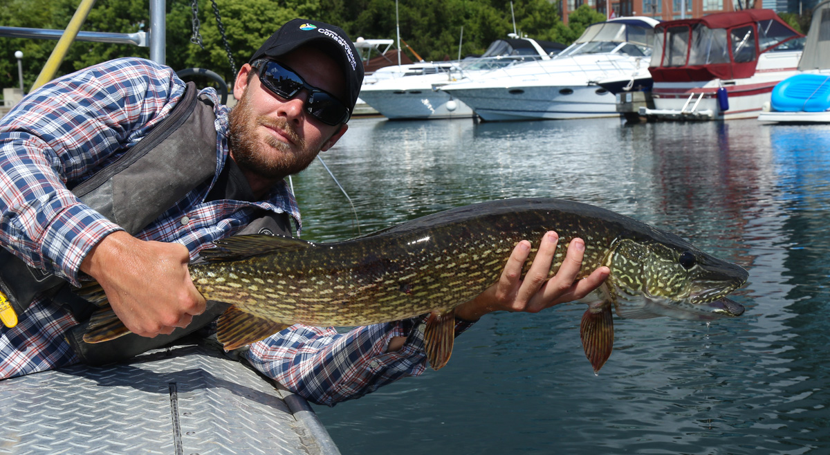 TRCA monitoring team member works on acoustic fish telemetry project