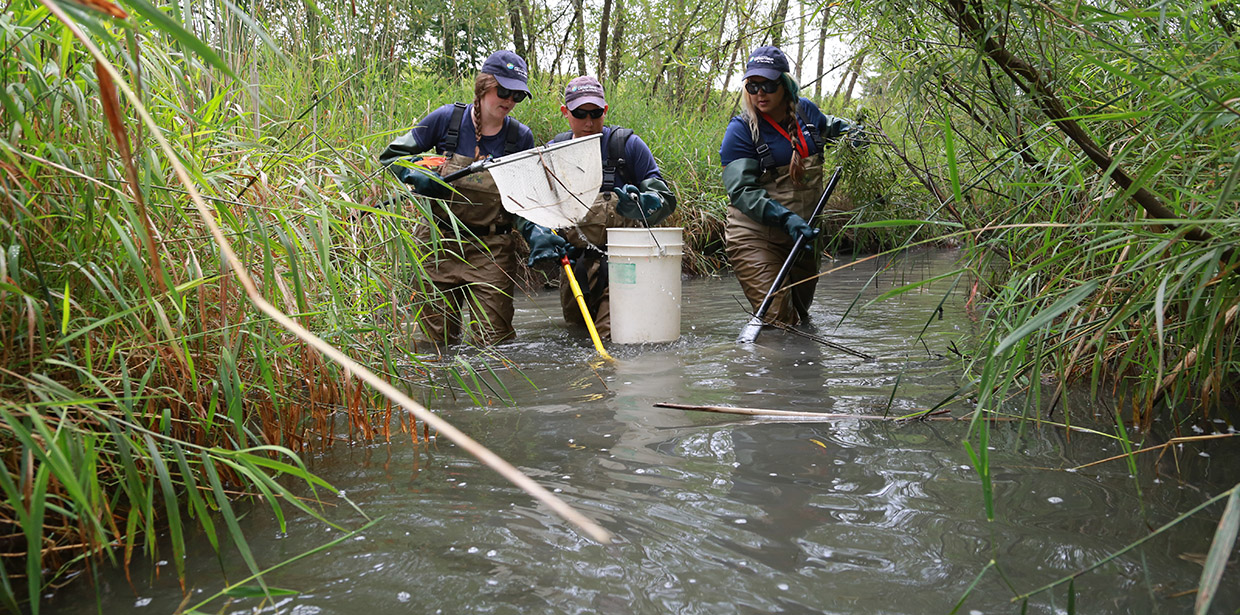 TRCA monitoring staff conduct electrofishing survey
