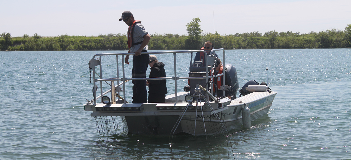 TRCA monitoring crew electrofishing near Tommy Thompson Park