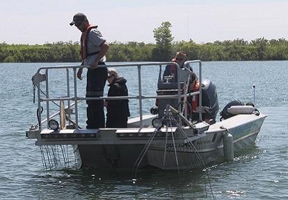 TRCA monitoring crew electrofishing near Tommy Thompson Park