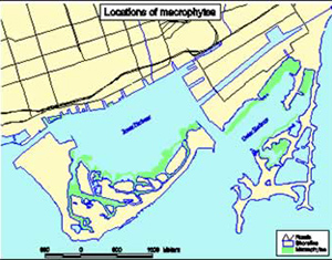 map of macrophyte locations in Toronto harbour