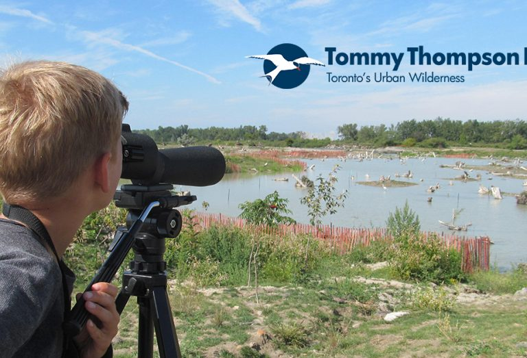 Junior Birders Camp at Tommy Thompson Park