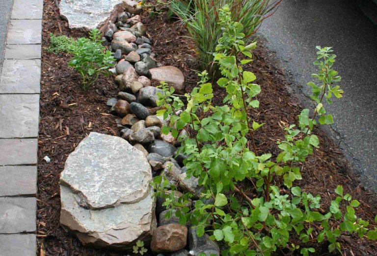 Rain garden along driveway