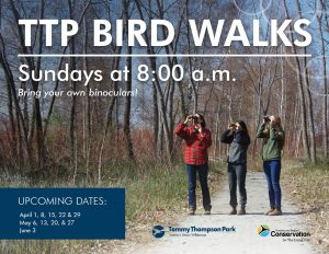 TTP Bird Walks @ Tommy Thompson Park |  |  |