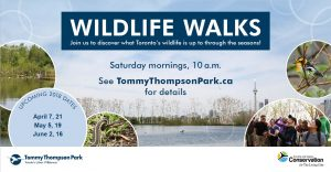 Wildlife Walks @ Tommy Thompson Park |  |  |