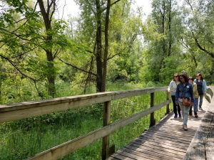 Tree Bark and Buds @ Oak Ridges Corridor Trailhead Parking Lot | Richmond Hill | Ontario | Canada