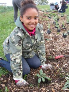 Community Planting – Summer Celebration! @ Heart Lake Conservation Area | Brampton | Ontario | Canada