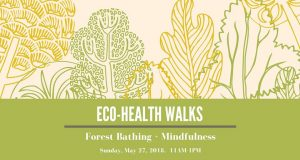 Eco-Health Walks: Forest Bathing + Mindfulness @  |  |