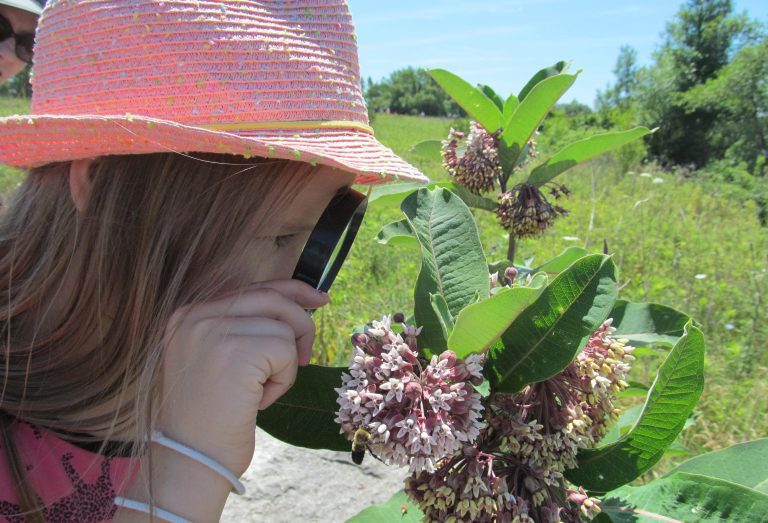 Girl looking at milkweed