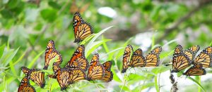 9th Annual Butterfly Festival @ Tommy Thompson Park
